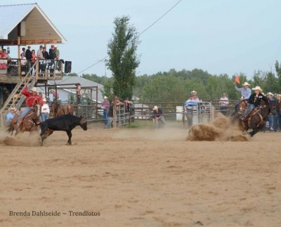 The team roper's new horses in action during a match roping hosted by the Schmidt Ranch