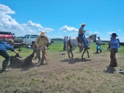 Fiesta Royale Ranching