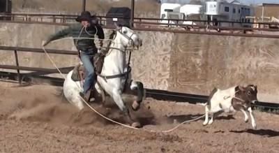 Fiesta Royale Calf Roping