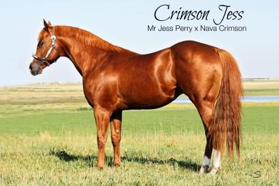 Crimson Jess text pedigree